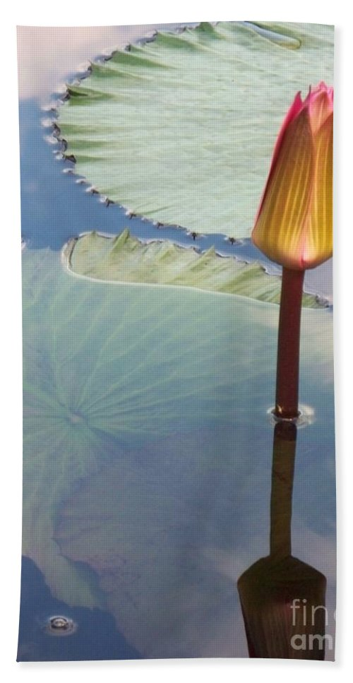 Photograph Hand Towel featuring the photograph Monet Water Lily Stem Red Orange by Eric Schiabor