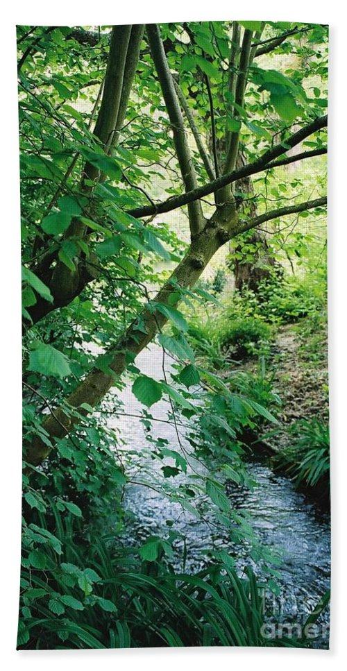 Photography Bath Sheet featuring the photograph Monet's Garden Stream by Nadine Rippelmeyer
