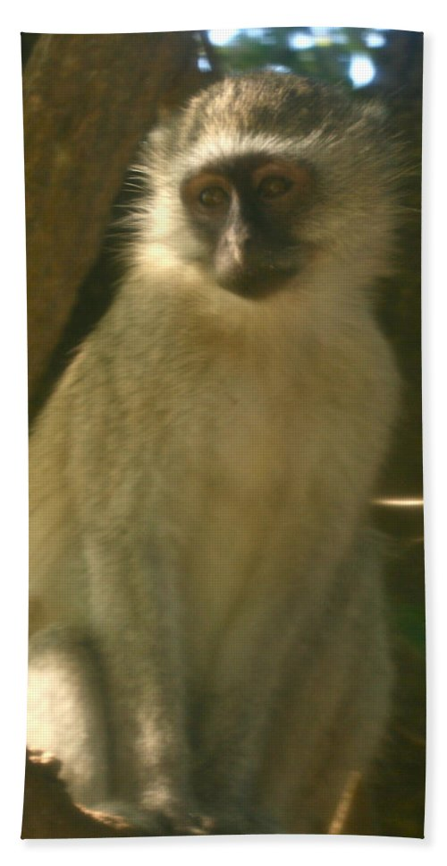 Karen Zuk Rosenblatt Art And Photography Bath Sheet featuring the photograph Monkey In The Tree by Karen Zuk Rosenblatt