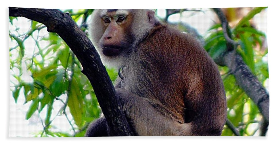 Monkey Hand Towel featuring the photograph Monkey In Tree by John Hughes