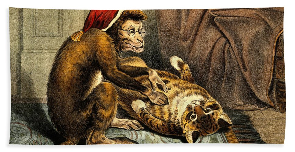 Historic Hand Towel featuring the photograph Monkey Physician Examining Cat For Fleas by Wellcome Images