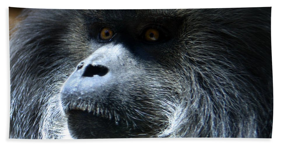 Monkey Bath Sheet featuring the photograph Monkey Stare by Anthony Jones