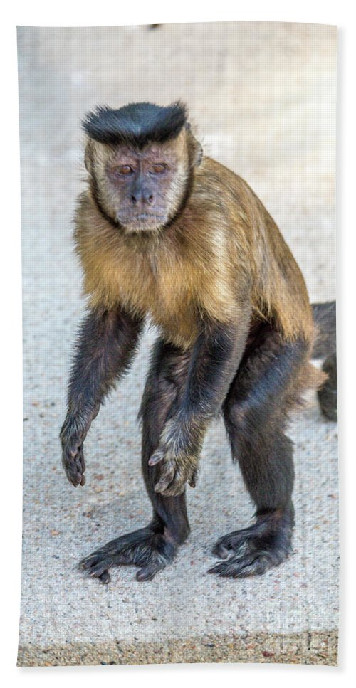 Monkey Hand Towel featuring the photograph Monkey_0726 by Enio Depaula
