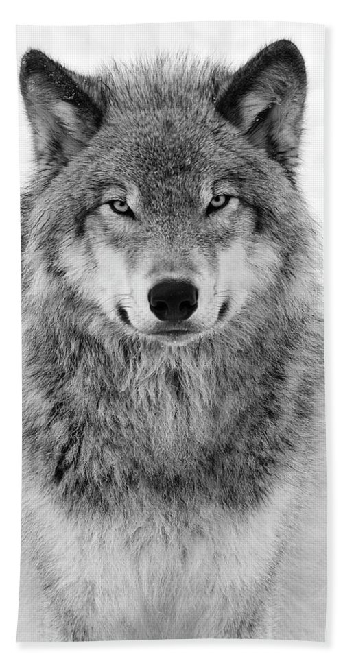 Wolf Hand Towel featuring the photograph Monotone Timber Wolf by Tony Beck