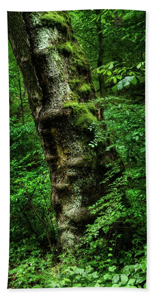 Maryland Bath Sheet featuring the photograph Moody Tree In Forest by Dennis Dame