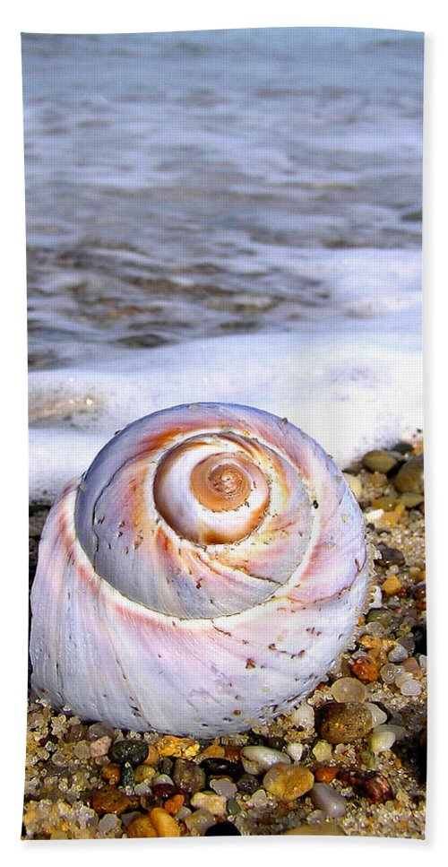 Moon Hand Towel featuring the photograph Moon Snail by Charles Harden