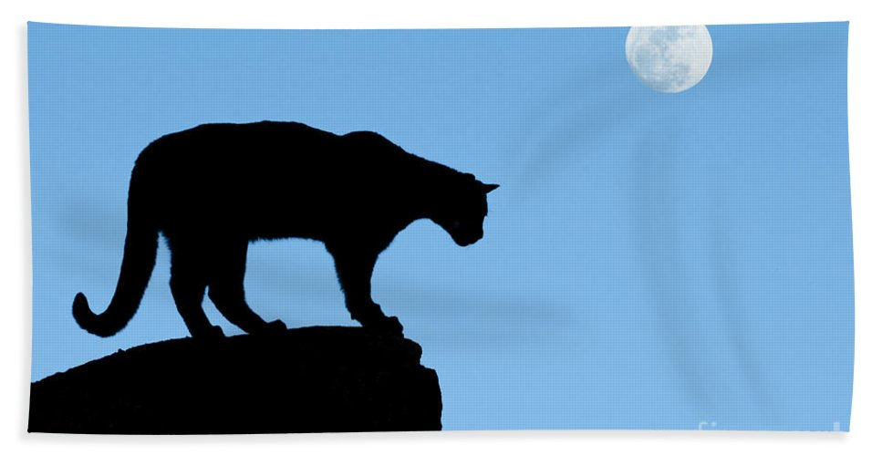Cougar Hand Towel featuring the photograph Moonrise And Cougar by Sandra Bronstein