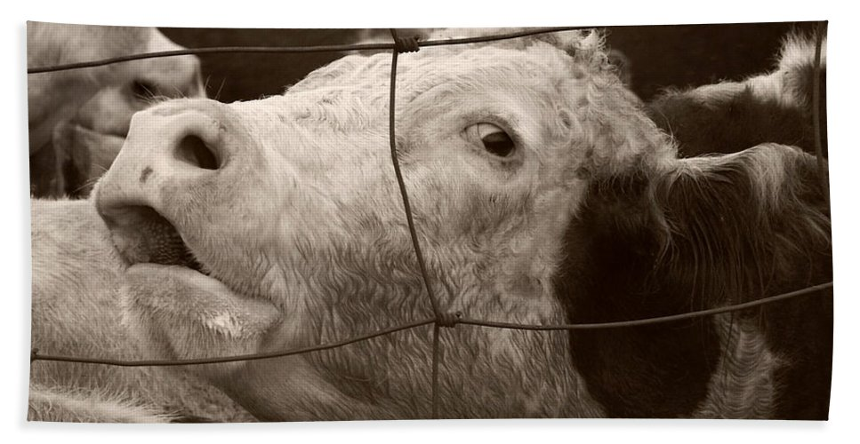 Cow Bath Sheet featuring the photograph Moooo by Marilyn Hunt