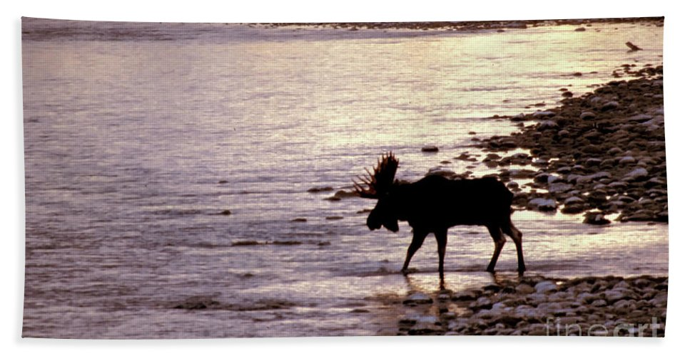 Moose Bath Sheet featuring the photograph Moose Crossing by Carolyn Fox