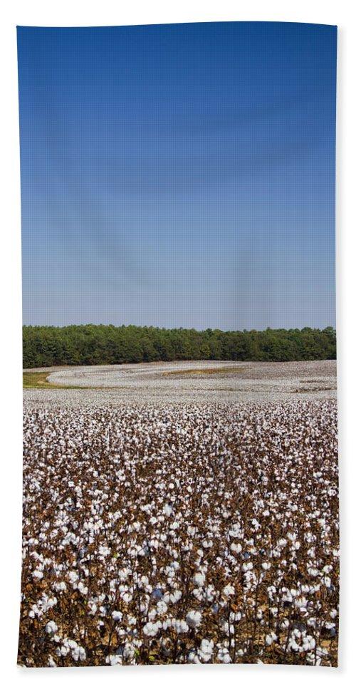 Cotton Bath Sheet featuring the photograph Morgan County Alabama Cotton Crop by Kathy Clark