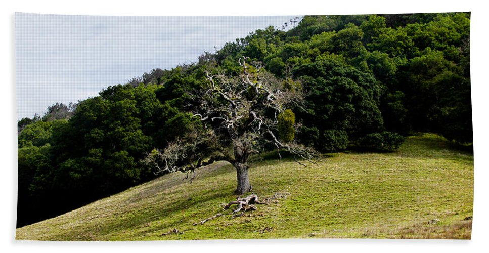 Trees Hand Towel featuring the photograph Morgan Territory Oak by Karen W Meyer