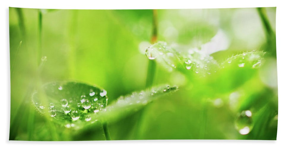 Dew Hand Towel featuring the photograph Morning Dew by Alexander Voss