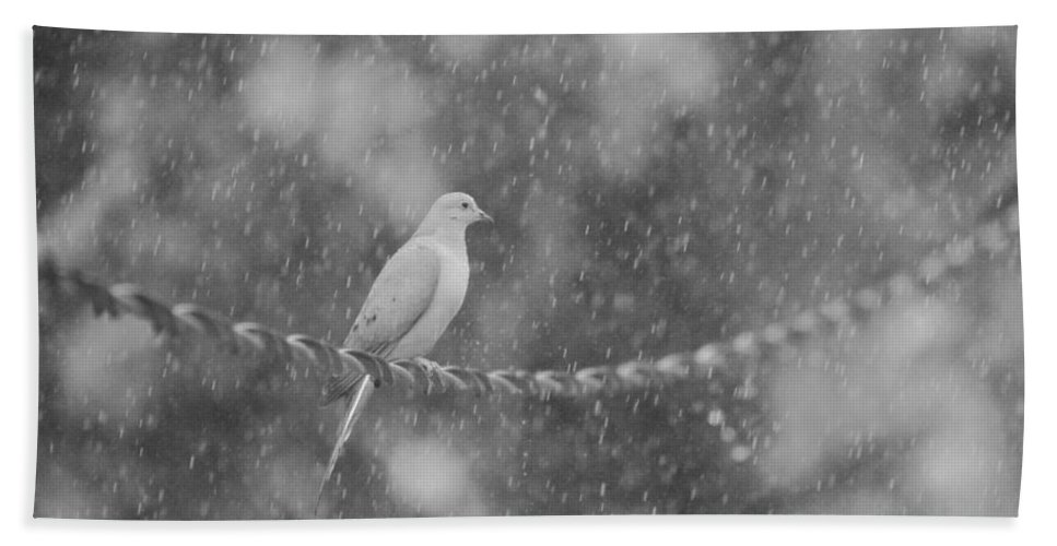 Morning Dove In The Rain Bath Sheet featuring the photograph Morning Dove In The Rain by Dan Sproul