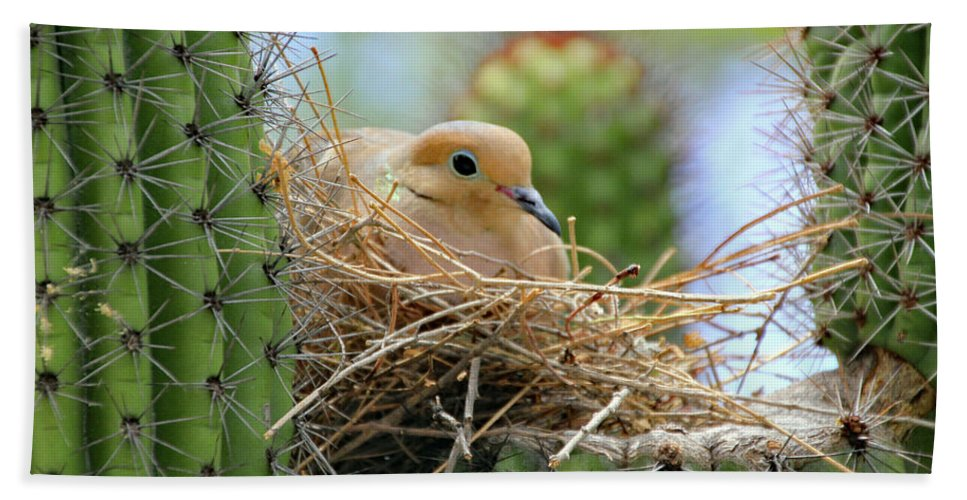 Bath Sheet featuring the photograph Mourning Dove Nest In A Cactus by Kevin Mcenerney