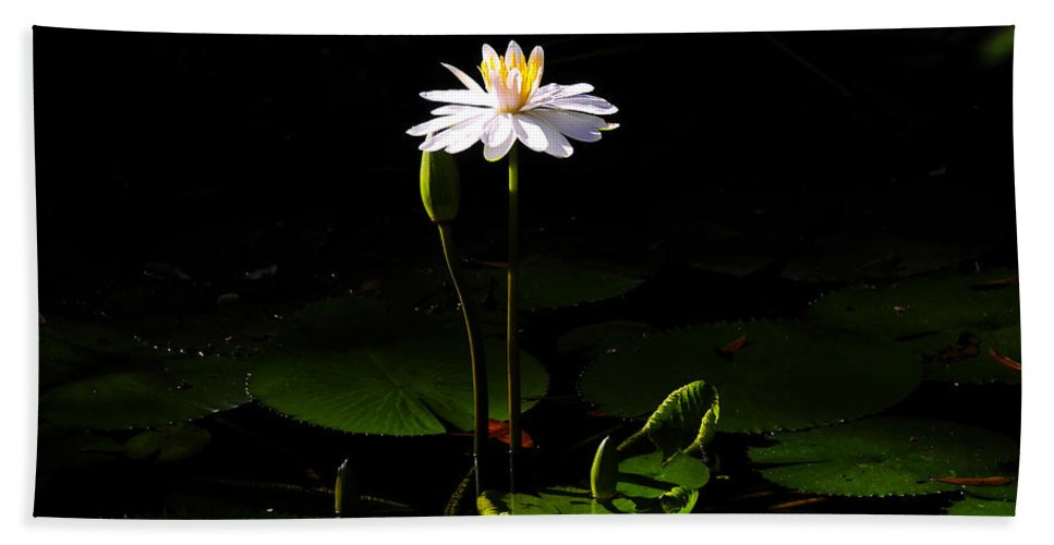 Morning Hand Towel featuring the photograph Morning Glory by David Lee Thompson