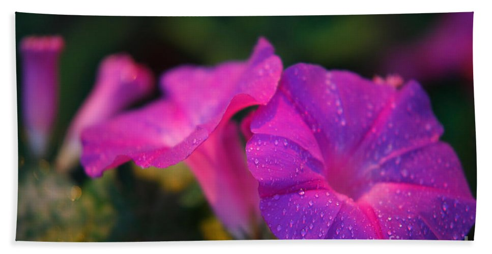 Flora Hand Towel featuring the photograph Morning Glory by Gaspar Avila