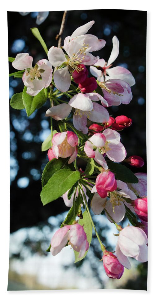 Cherry Blossoms Hand Towel featuring the photograph Morning Light by Denise Harty