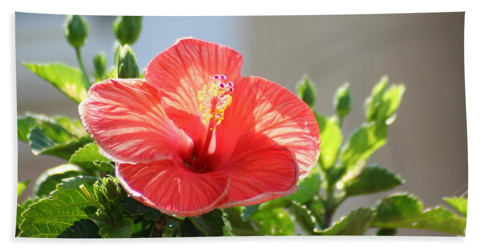 Hibiscus Hand Towel featuring the photograph Morning Light Hibiscus by Tammy Finnegan
