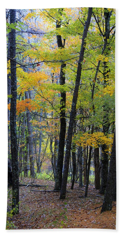 Bluestone Hand Towel featuring the photograph Morning Mist On The Path by Teresa Mucha