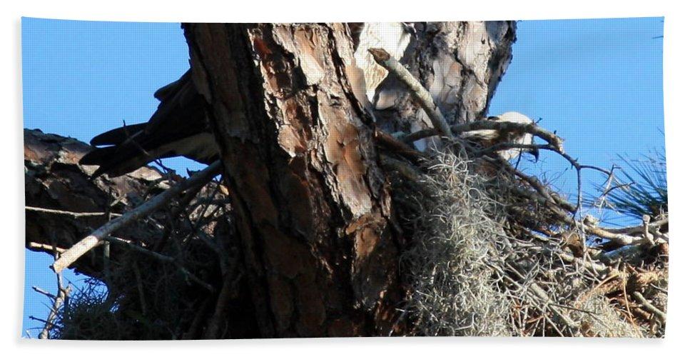 Nest Bath Sheet featuring the photograph Moss Nest by Carol Groenen