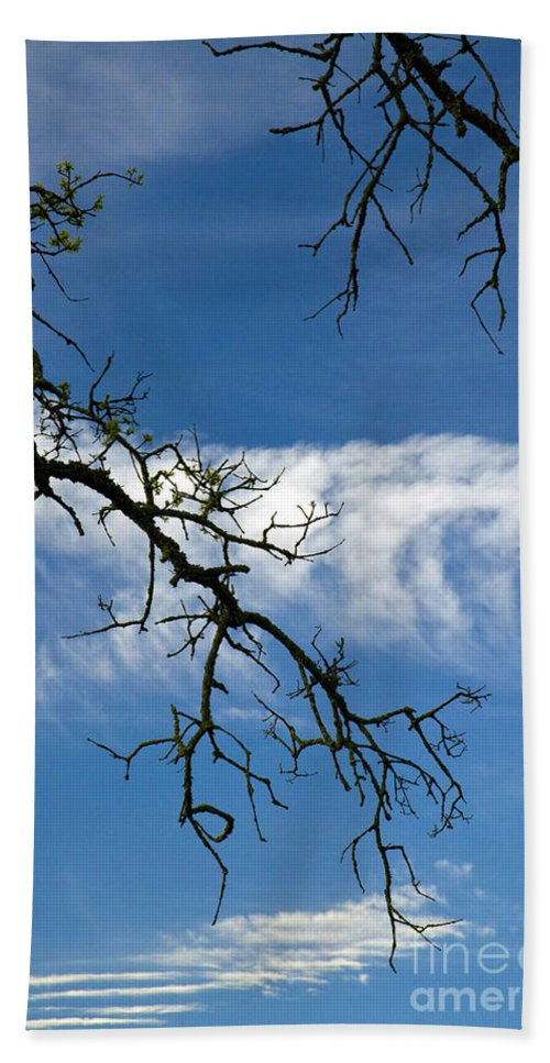 California Scenes Hand Towel featuring the photograph Mossy Branches Skyscape by Norman Andrus