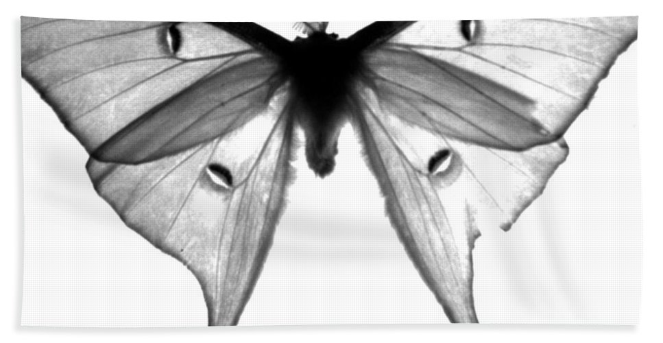 Moth Hand Towel featuring the photograph Moth by Amanda Barcon