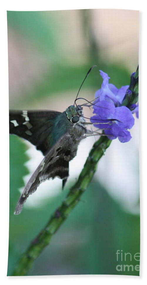 Nature Hand Towel featuring the photograph Moth On Blue Flower by Carol Groenen