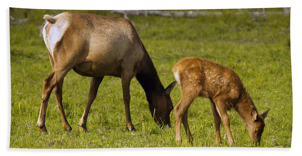 Elk Bath Towel featuring the photograph Mother Elk And Fawn by Denise McAllister