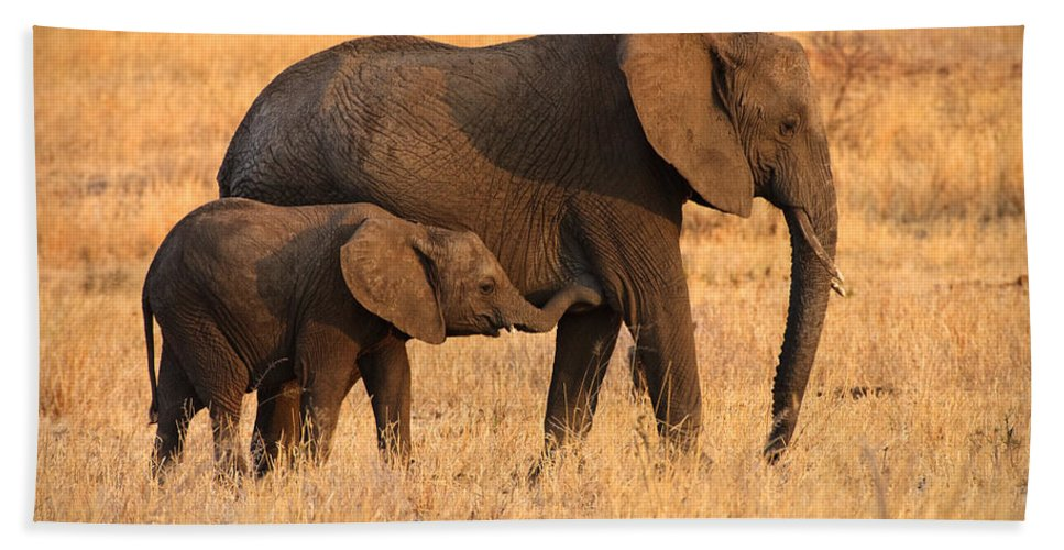 3scape Photos Bath Towel featuring the photograph Mother and Baby Elephants by Adam Romanowicz