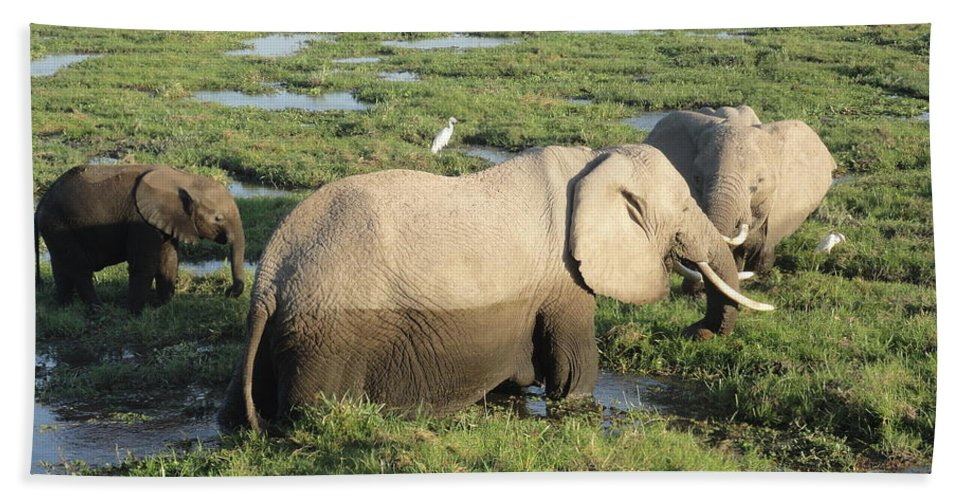 Elephants Bath Sheet featuring the photograph Mother And Calves by Serah Mbii