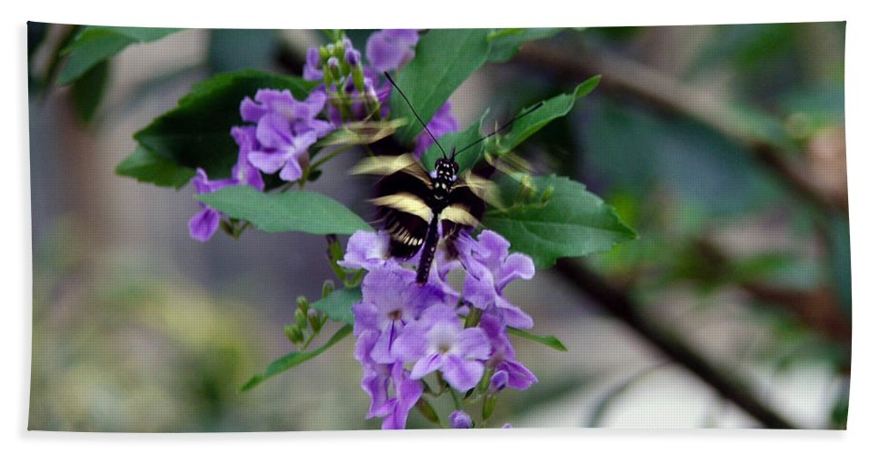 Butterfly Bath Towel featuring the photograph Motion by Robert Meanor