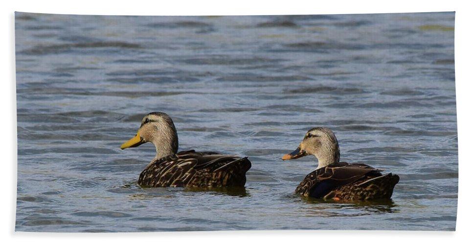 Waterfowl Bath Sheet featuring the photograph Mottled Ducks by Dwight Eddington