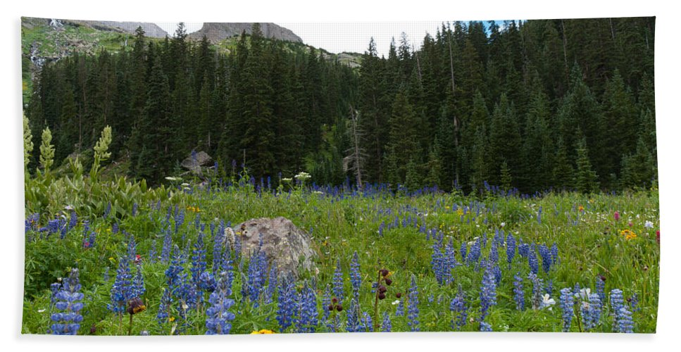 Blue Lake Hand Towel featuring the photograph Mount Sneffels Lupine Landscape by Cascade Colors