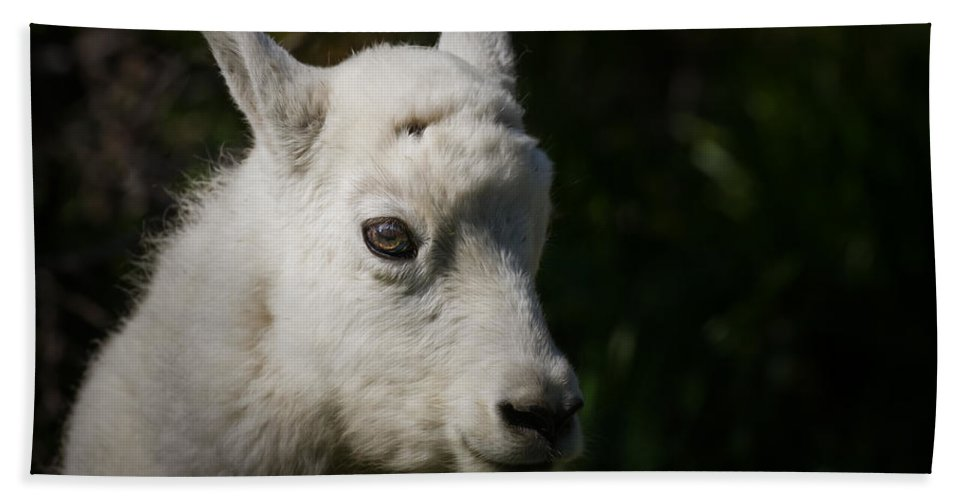 Animals Hand Towel featuring the photograph Mountain Goat Kid Portrait by Rikk Flohr