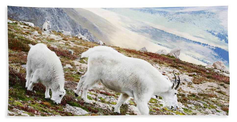 Mountain Bath Sheet featuring the photograph Mountain Goats 1 by Marilyn Hunt