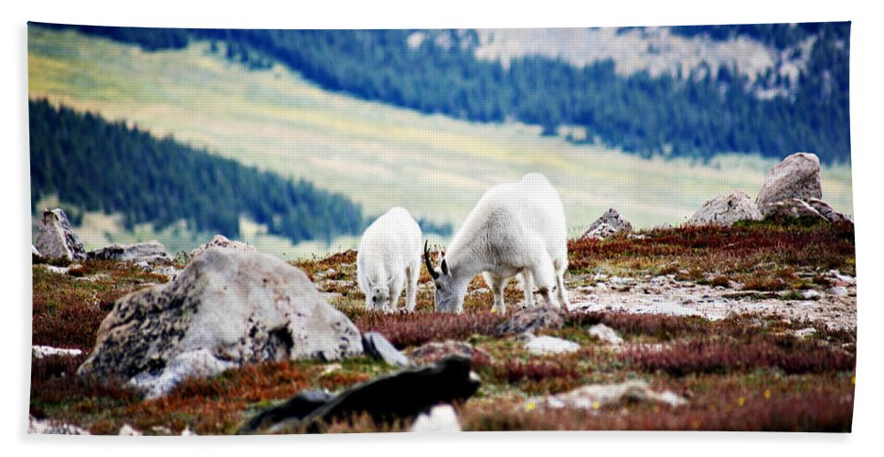 Animal Bath Sheet featuring the photograph Mountain Goats 2 by Marilyn Hunt