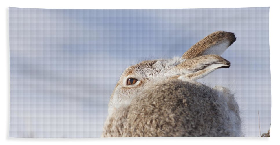 Mountain Hare Bath Sheet featuring the photograph Mountain Hare - Scottish Highlands #10 by Karen Van Der Zijden
