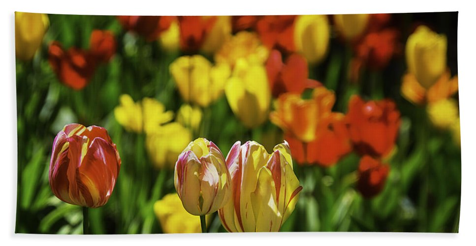 Mountain Hand Towel featuring the photograph Mountain Tulips by Garry Gay