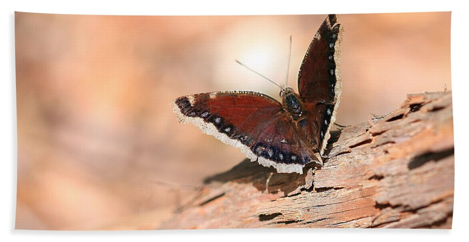 Mourning Cloak Butterfly Bath Sheet featuring the photograph Mourning Cloak Butterfly by Angela Murdock