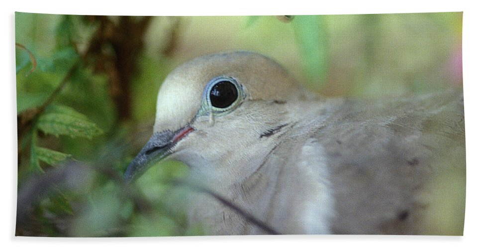 Bird Bath Towel featuring the photograph Mourning Dove by Yuri Lev