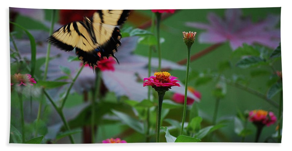 Butterfly Hand Towel featuring the photograph Move On. by Robert Meanor