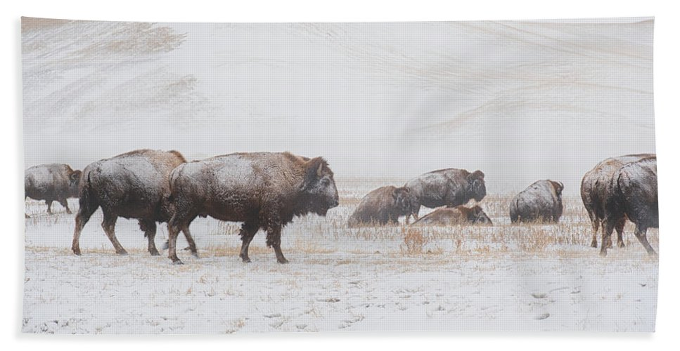 Buffalo Bath Sheet featuring the photograph Move Out by Derald Gross