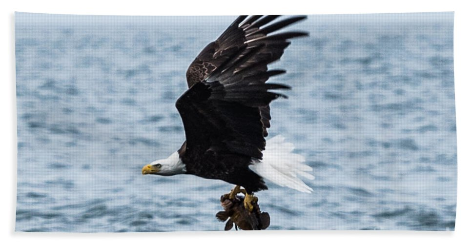 Nature Bath Sheet featuring the photograph Mr. Bald Eagles Catch by Tom Rostron