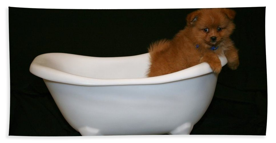 Puppy Bath Sheet featuring the photograph Mr. Fox by Tina Meador