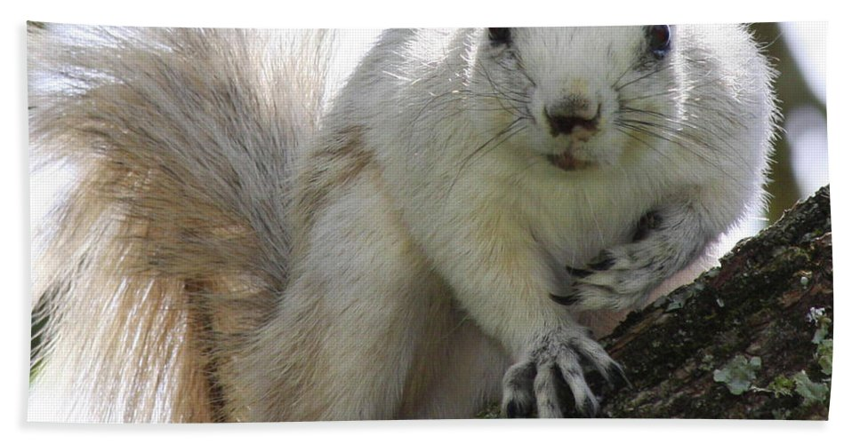 Squirrel Bath Sheet featuring the photograph Mr. Inquisitive II by Betsy Knapp