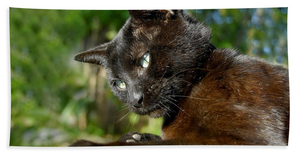 Cat Hand Towel featuring the photograph Mr. Night by David Lee Thompson