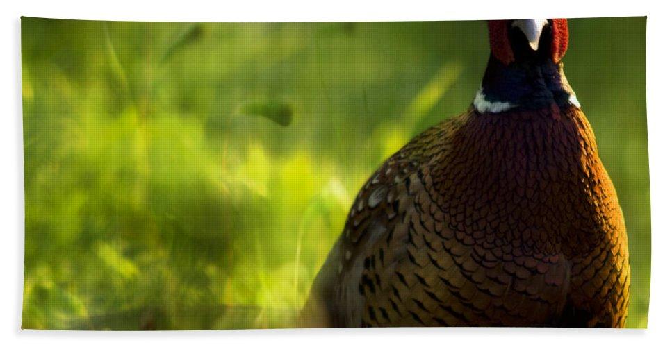 Bird Bath Towel featuring the photograph Mr Pheasant by Angel Ciesniarska