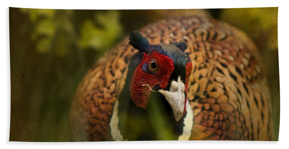 Pheasant Bath Sheet featuring the photograph Mr Spring by Angel Ciesniarska
