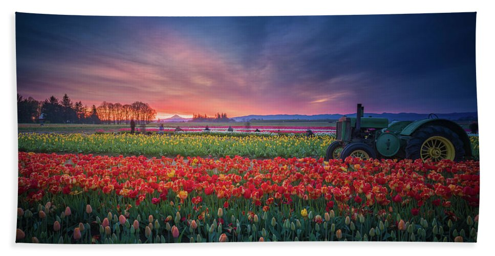 America Hand Towel featuring the photograph Mt. Hood And Tulip Field At Dawn by William Freebilly photography