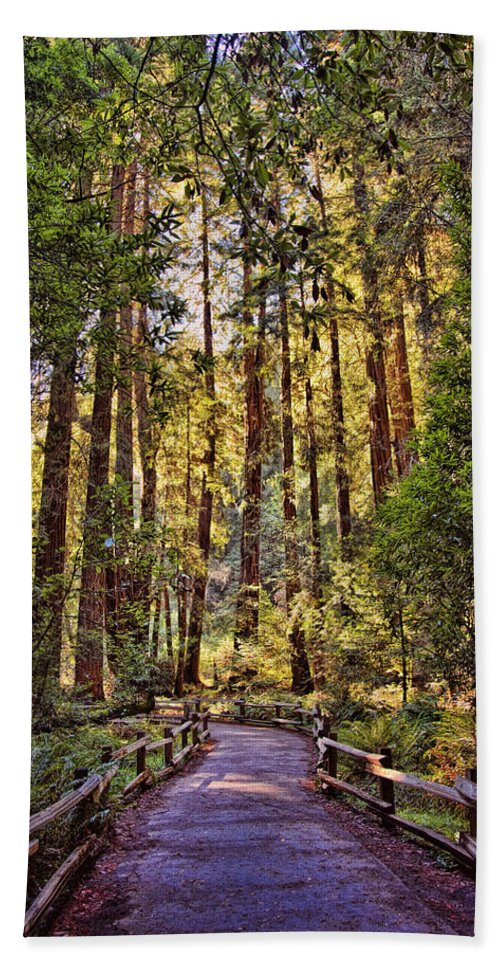 Muir Woods Hand Towel featuring the photograph Muir Woods by Diana Powell